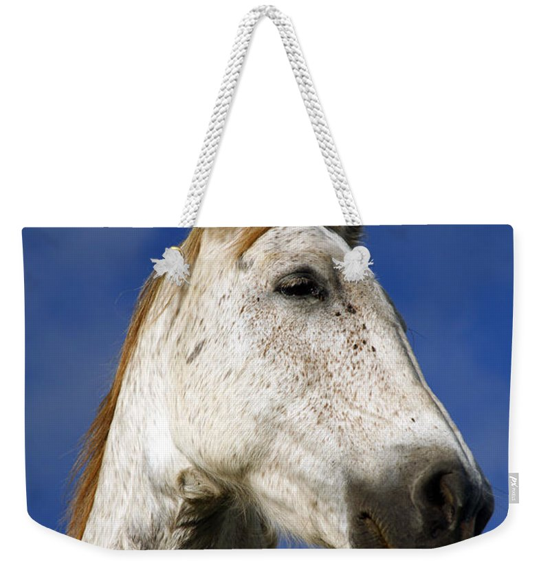 Animals Weekender Tote Bag featuring the photograph Horse Portrait by Gaspar Avila