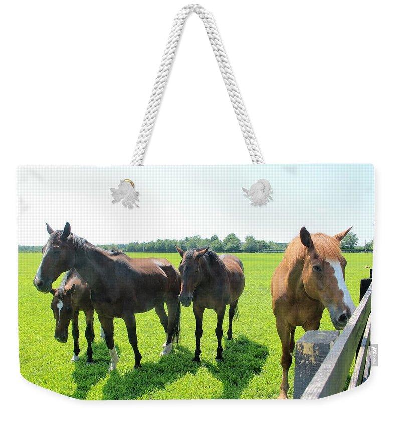 Horses Weekender Tote Bag featuring the photograph Horses In Bridgehampton by David Zuhusky