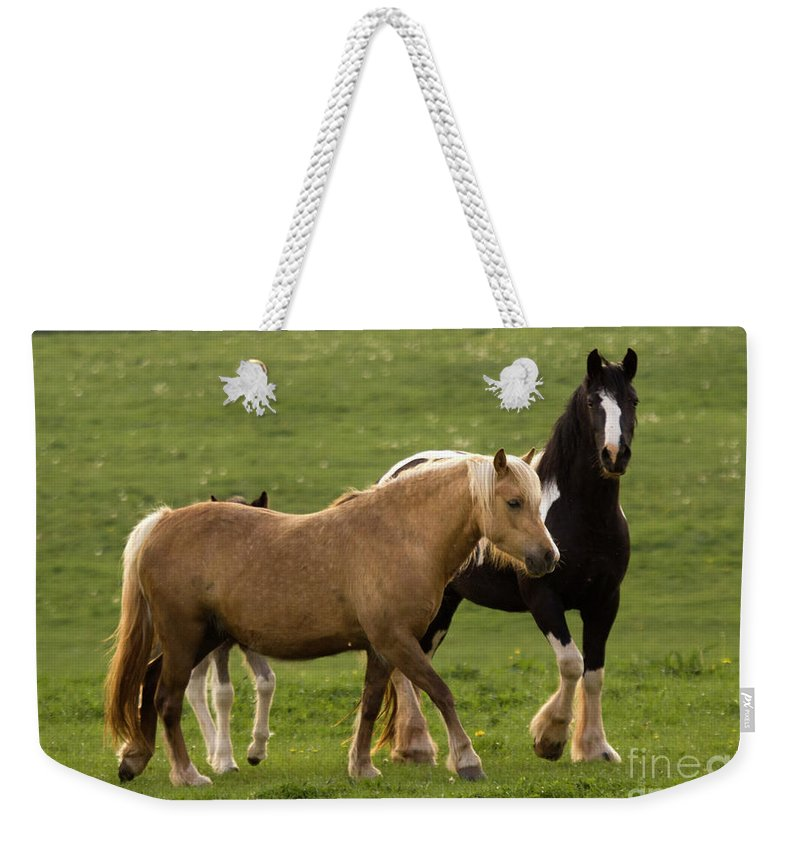 Horse Weekender Tote Bag featuring the photograph Horses Photography by Angel Ciesniarska