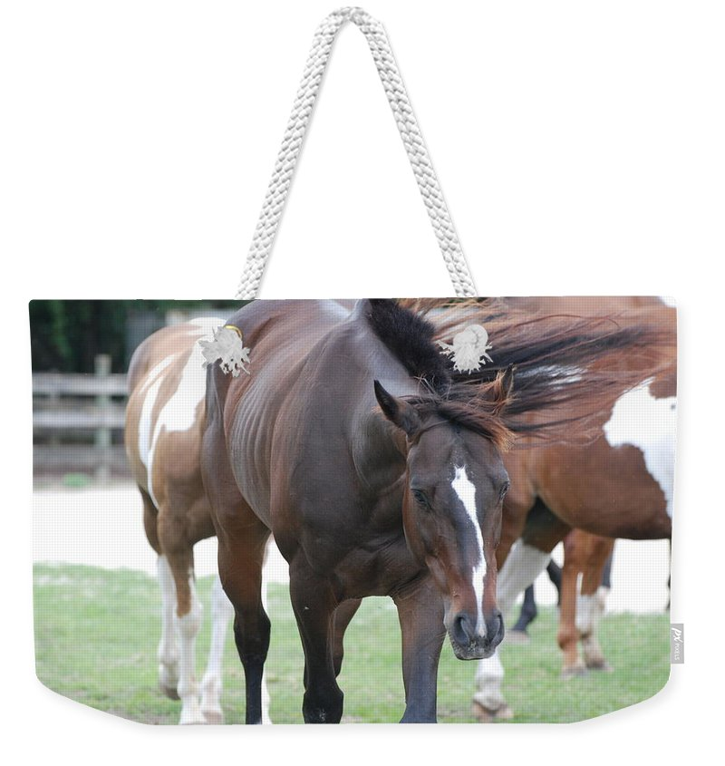 Horses Weekender Tote Bag featuring the photograph Horses by Rob Hans