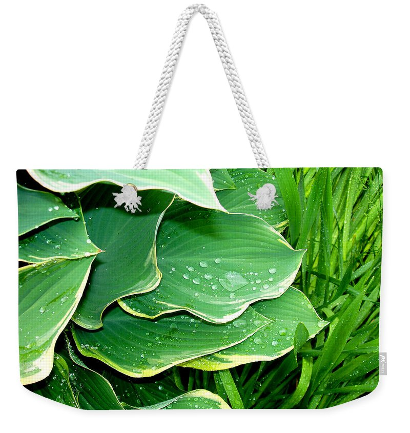 Hostas Weekender Tote Bag featuring the photograph Hosta Leaves And Waterdrops by Nancy Mueller