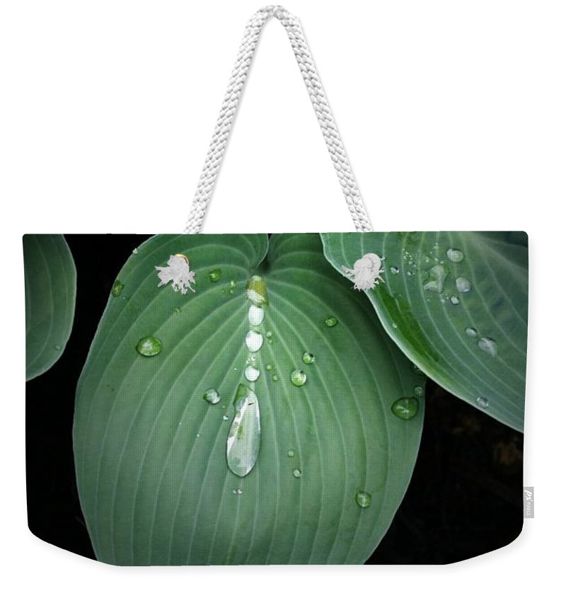 Hostas Weekender Tote Bag featuring the photograph Hostas After The Rain by Tina Meador