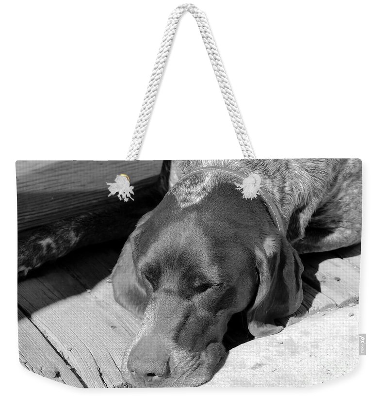 Dog Weekender Tote Bag featuring the photograph Hound Dog by David Lee Thompson
