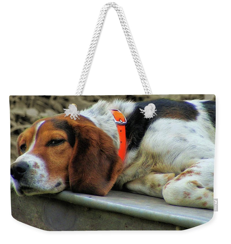 Dog Weekender Tote Bag featuring the photograph Hound Dog by JAMART Photography