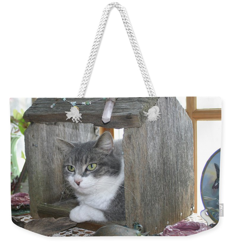 House Cat Weekender Tote Bag featuring the photograph House Cat by Bjorn Sjogren