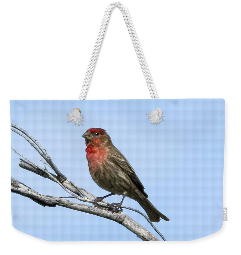 Myhaver Photography Weekender Tote Bag featuring the photograph House Finch H11 by Mark Myhaver