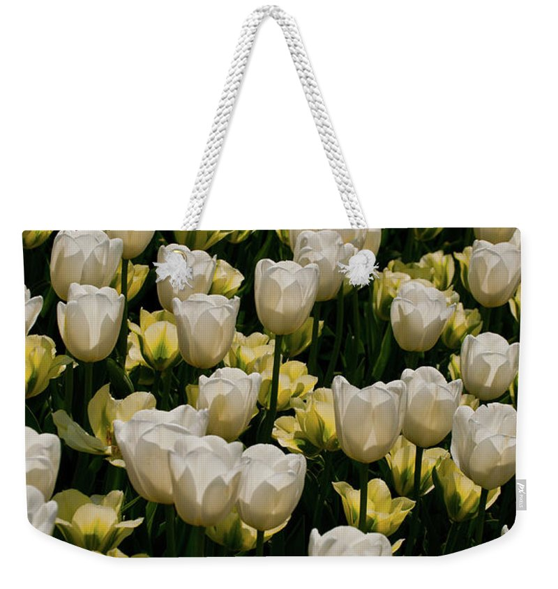 Weekender Tote Bag featuring the photograph House Of White by Trish Tritz