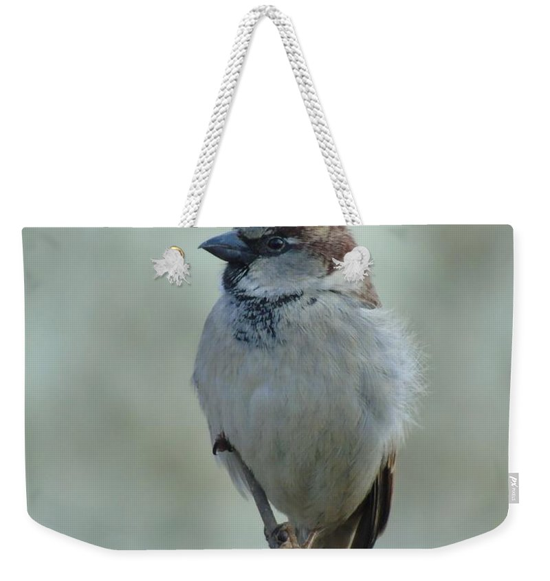 House Sparrow Weekender Tote Bag featuring the photograph House Sparrow - Male by Joanne Young