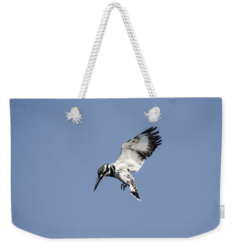Kingfisher Weekender Tote Bag featuring the photograph Hovering Of White Pied Kingfisher by Manjot Singh Sachdeva