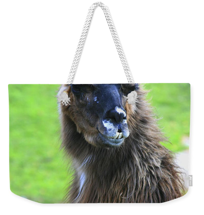 Lama Weekender Tote Bag featuring the photograph How Do I Look by Deborah Benoit