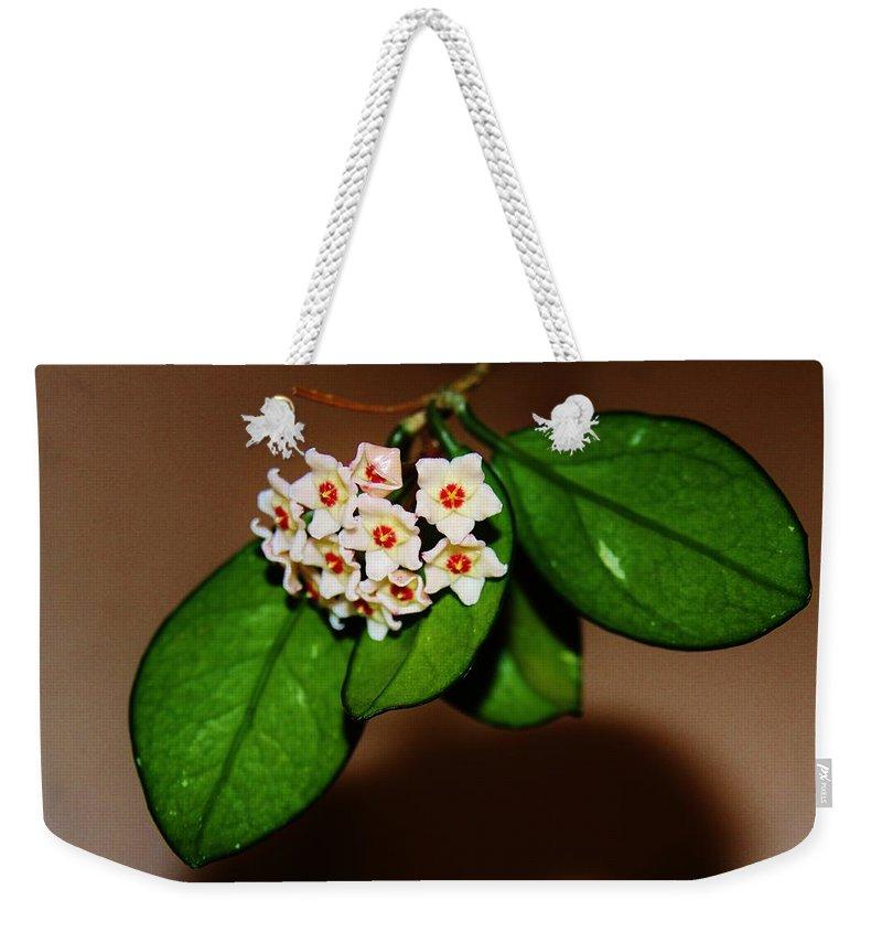 Hoya Carnosa Weekender Tote Bag featuring the photograph Hoya Carnosa by Lori Mahaffey