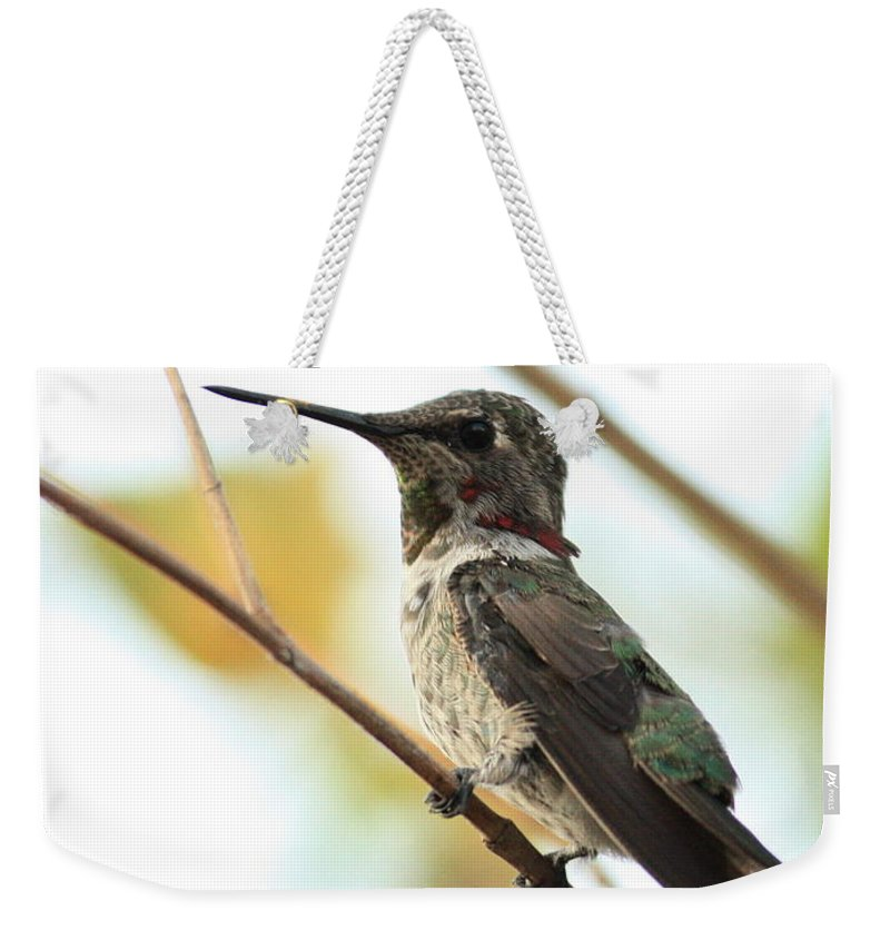 Hummingbird Weekender Tote Bag featuring the photograph Hummingbird Between Branches by Carol Groenen