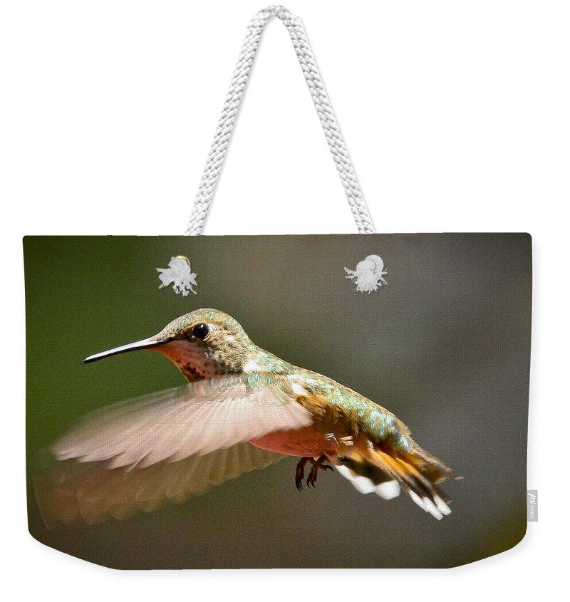 Hummingbird Weekender Tote Bag featuring the photograph Hummingbird Facing Left by Albert Seger