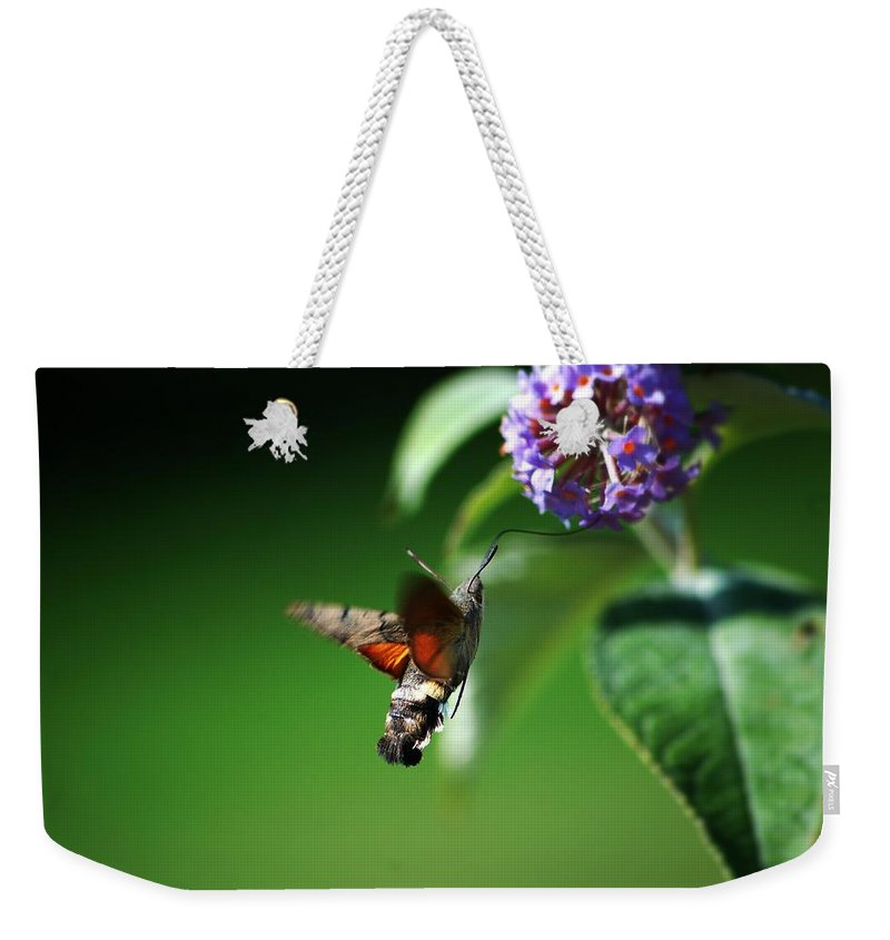Hummingbird Hawk Moth Weekender Tote Bag featuring the photograph Hummingbird Hawk Moth - Five by P Donovan