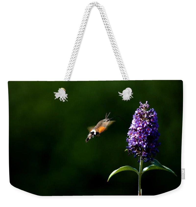 Hummingbird Hawk Moth Weekender Tote Bag featuring the photograph Hummingbird Hawk Moth - Three by P Donovan