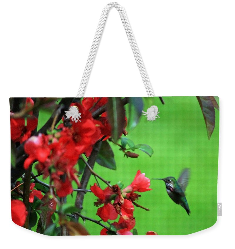 Flowering Quince Weekender Tote Bag featuring the photograph Hummingbird In The Flowering Quince - Digital Painting by Carol Groenen