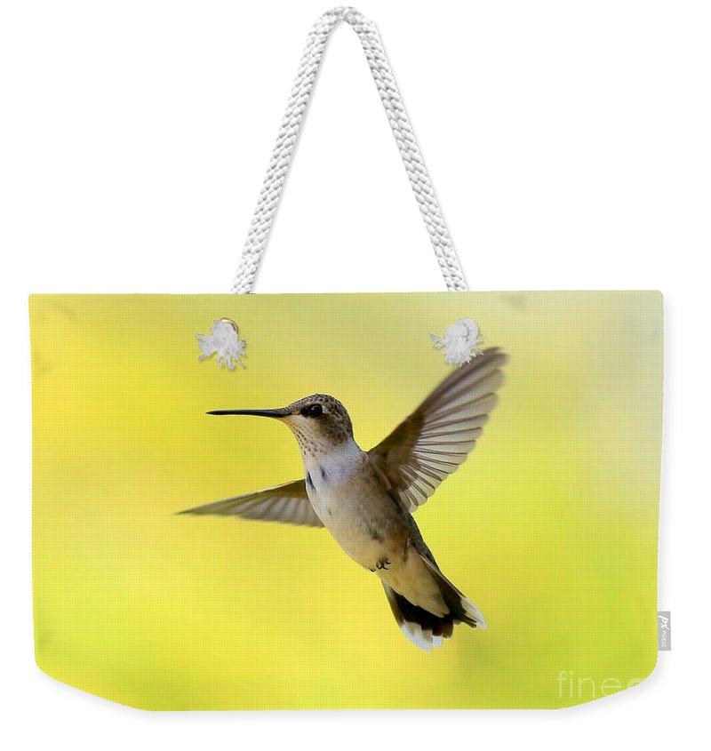 Designs Similar to Hummingbird In Yellow