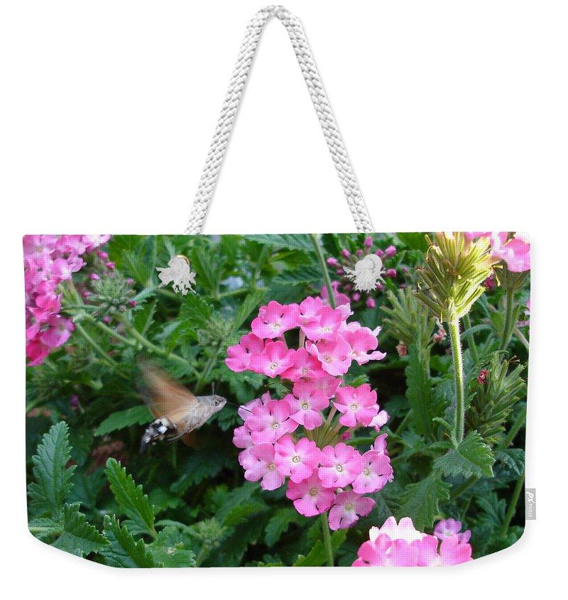 Flower Weekender Tote Bag featuring the photograph Hummingbird Moth On Pink Verbena by Susan Baker
