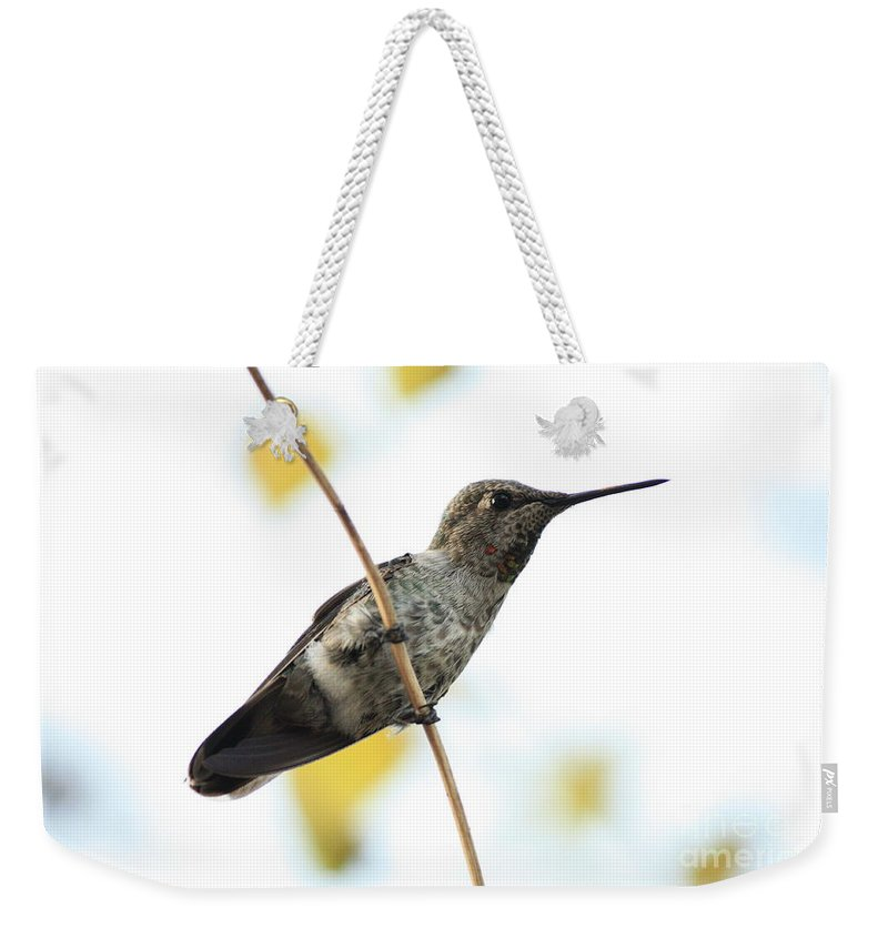 Hummingbird Weekender Tote Bag featuring the photograph Hummingbird On Tightrope by Carol Groenen