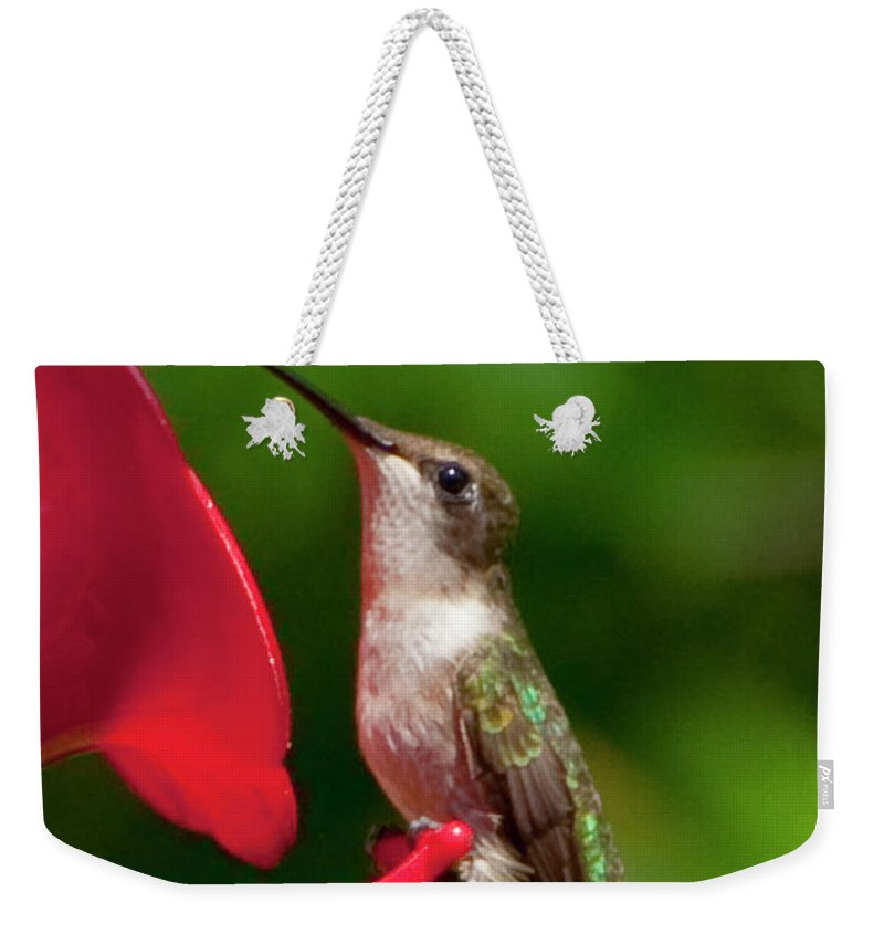 Photography Weekender Tote Bag featuring the photograph Hummingbird by Steven Natanson