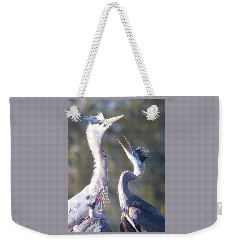 Immature Great Blue Herons Weekender Tote Bag featuring the photograph Hunger Games by Bill Zajac