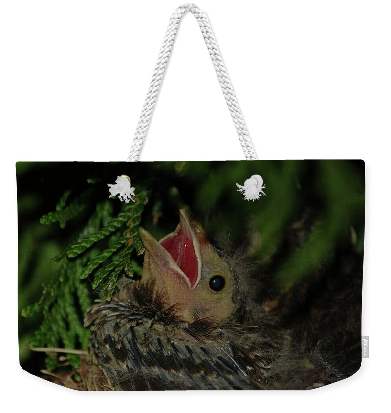Bird Weekender Tote Bag featuring the photograph Hungry Bird by Gaby Swanson