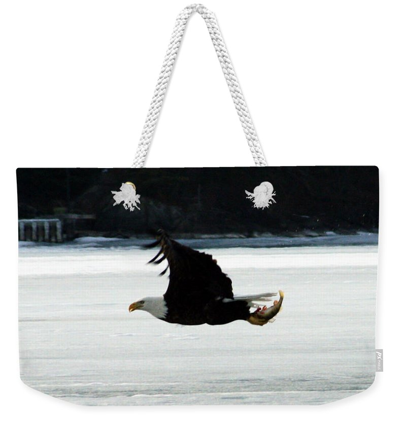 American Eagle Bird Flying Wings Fish Nature Wild Animal Weekender Tote Bag featuring the photograph Hungry Eagle by Andrea Lawrence