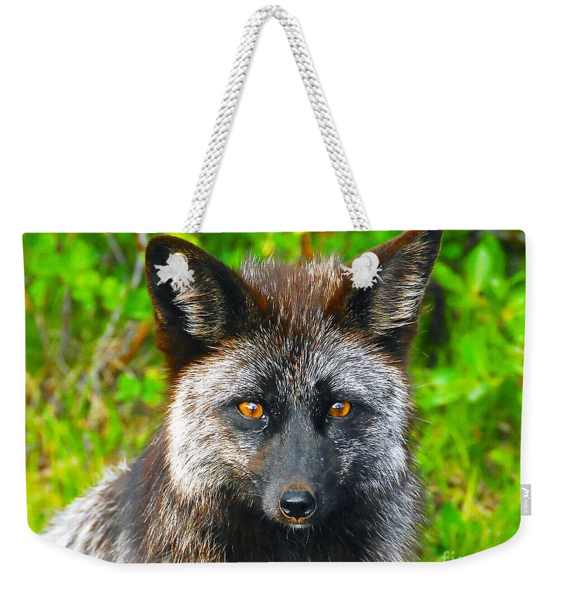 Gray Fox Weekender Tote Bag featuring the photograph Hungry Eyes by David Lee Thompson