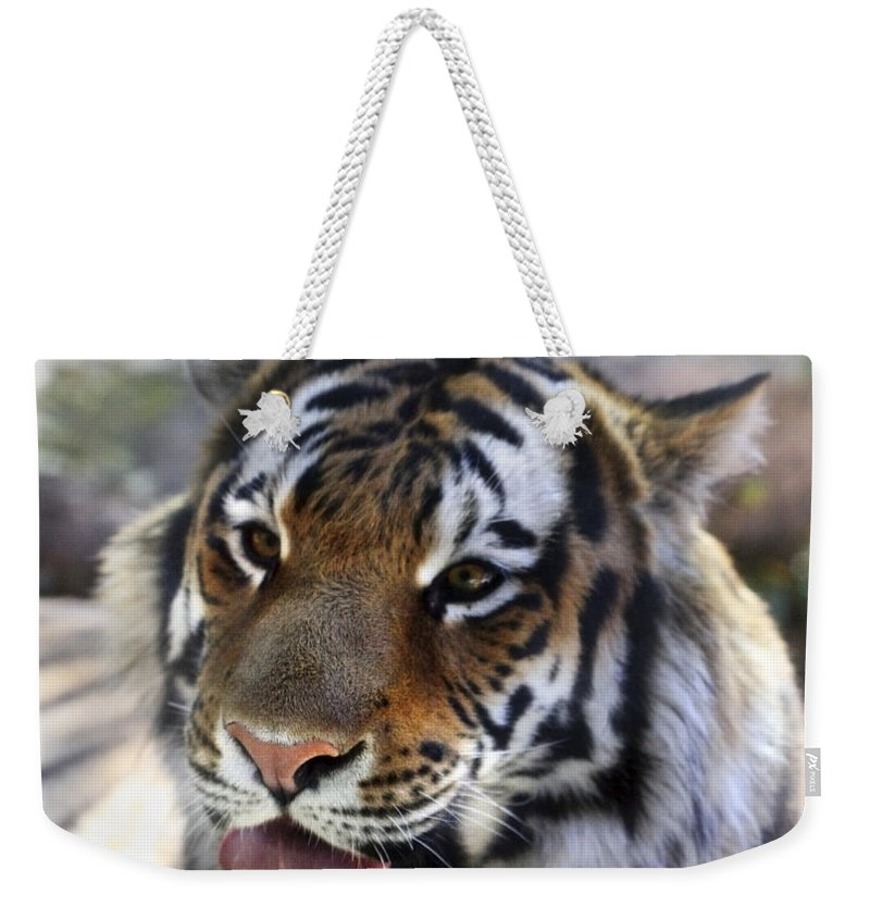 Animal Weekender Tote Bag featuring the photograph Hungry Eyes by Marilyn Hunt