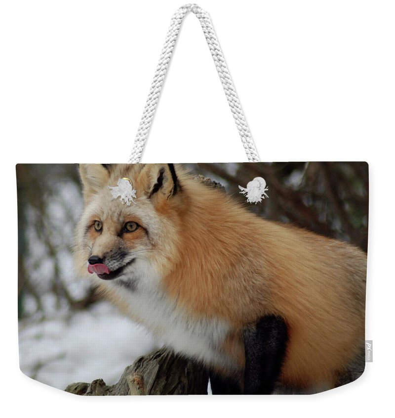Fox Weekender Tote Bag featuring the photograph Hungry Fox by Richard Bryce and Family