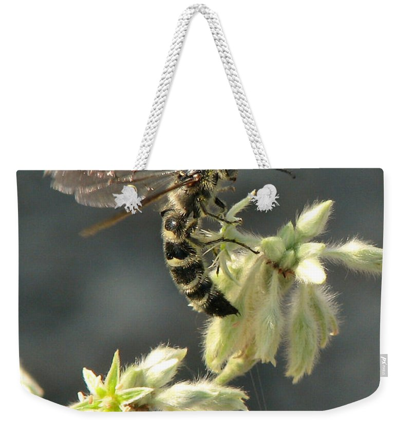 Nature Weekender Tote Bag featuring the photograph Hunter Wasp by Peg Urban