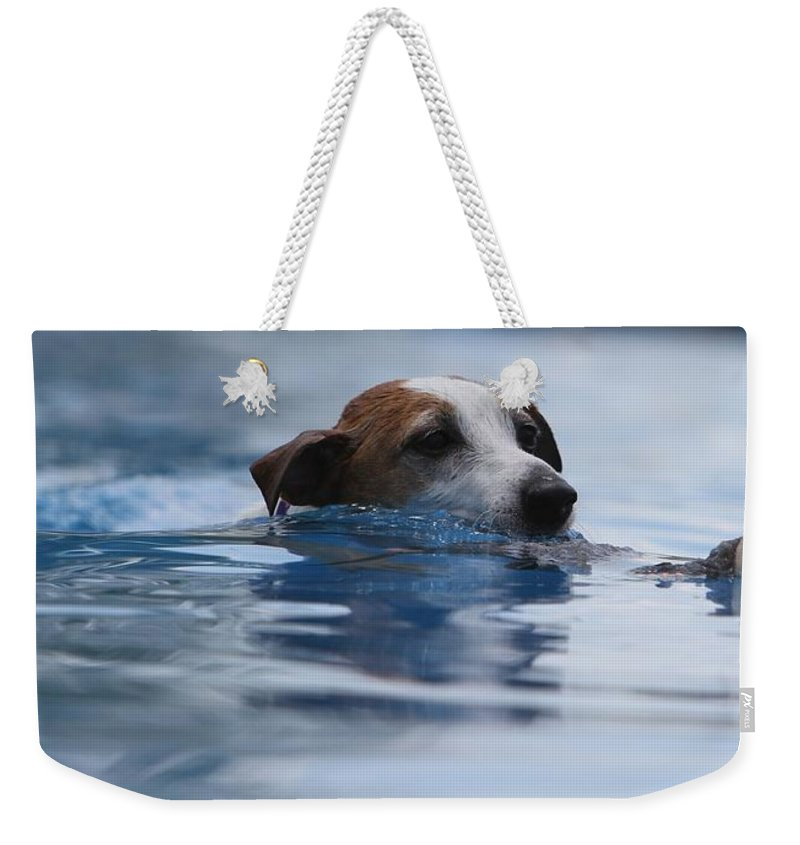 Animal Weekender Tote Bag featuring the photograph Hunting Dog by Susie Gordon