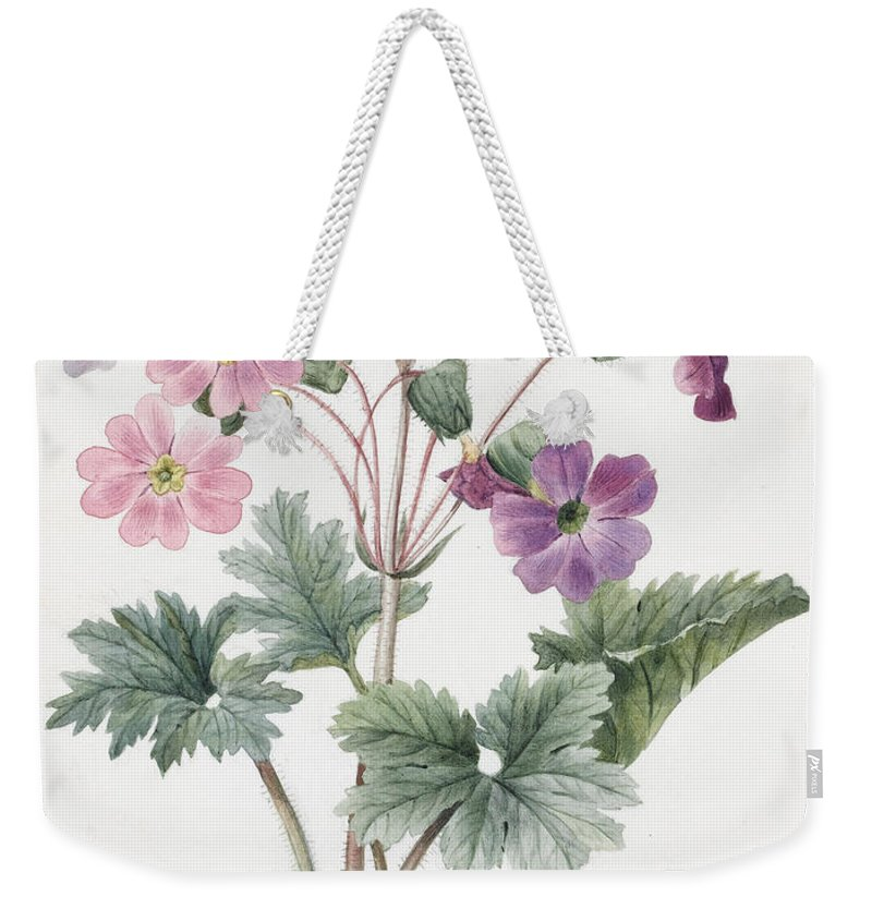 Hybrid Auricula Weekender Tote Bag featuring the painting Hybrid Auricula by Louise D'Orleans