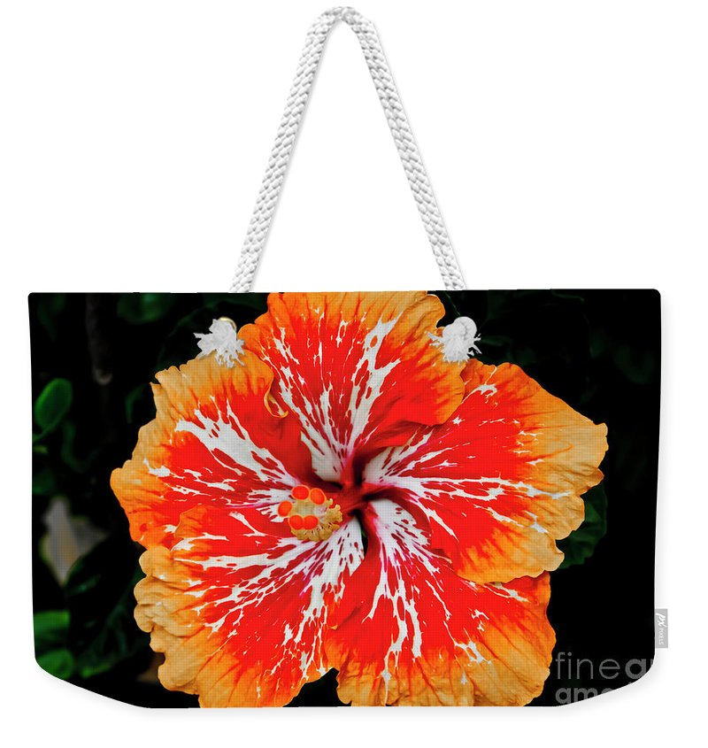 Flower Weekender Tote Bag featuring the photograph Hybrid Hibiscus II Maui Hawaii by Jim Cazel