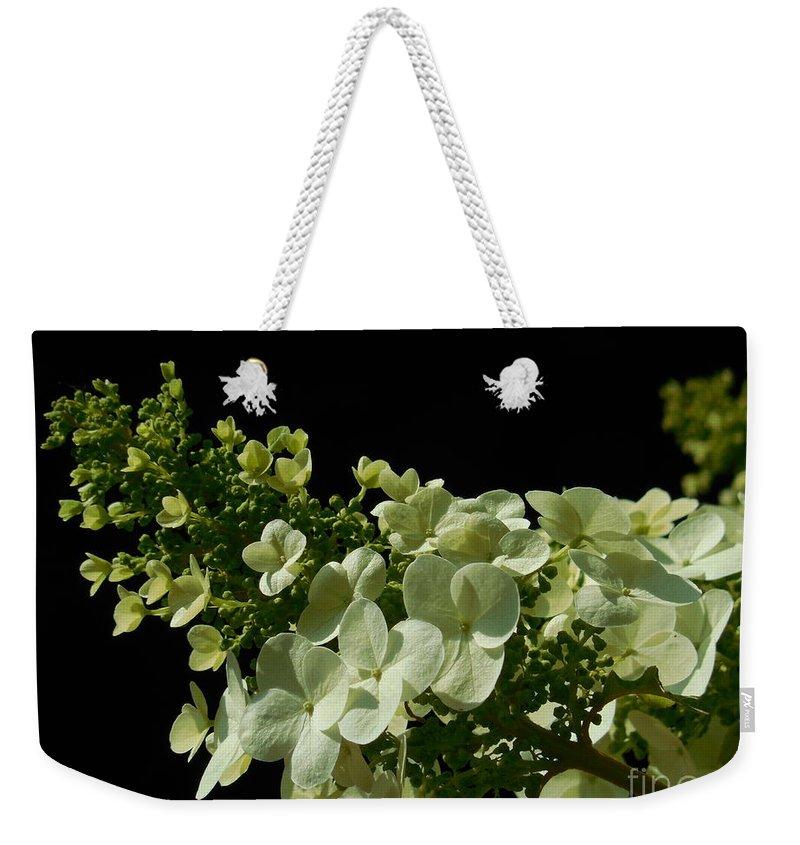Hydrangea Weekender Tote Bag featuring the photograph Hydrangea Formal Study Landscape by Rowena Throckmorton