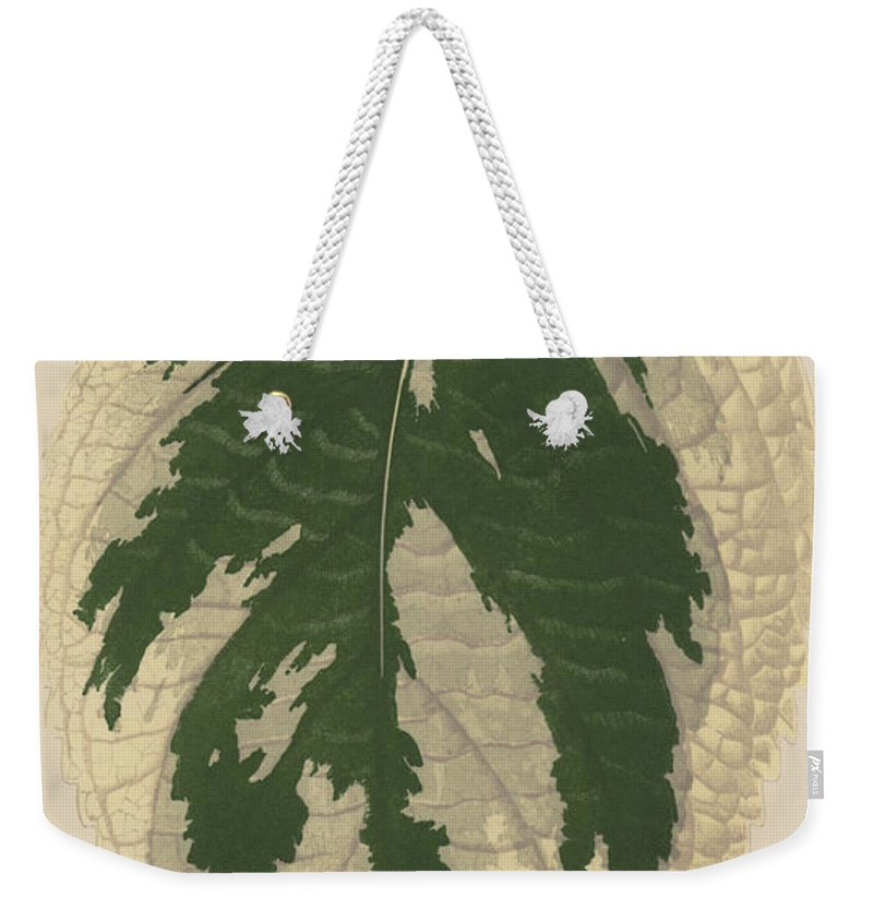 Leaf Weekender Tote Bag featuring the painting Hydrangea Japonica Variegata by English School