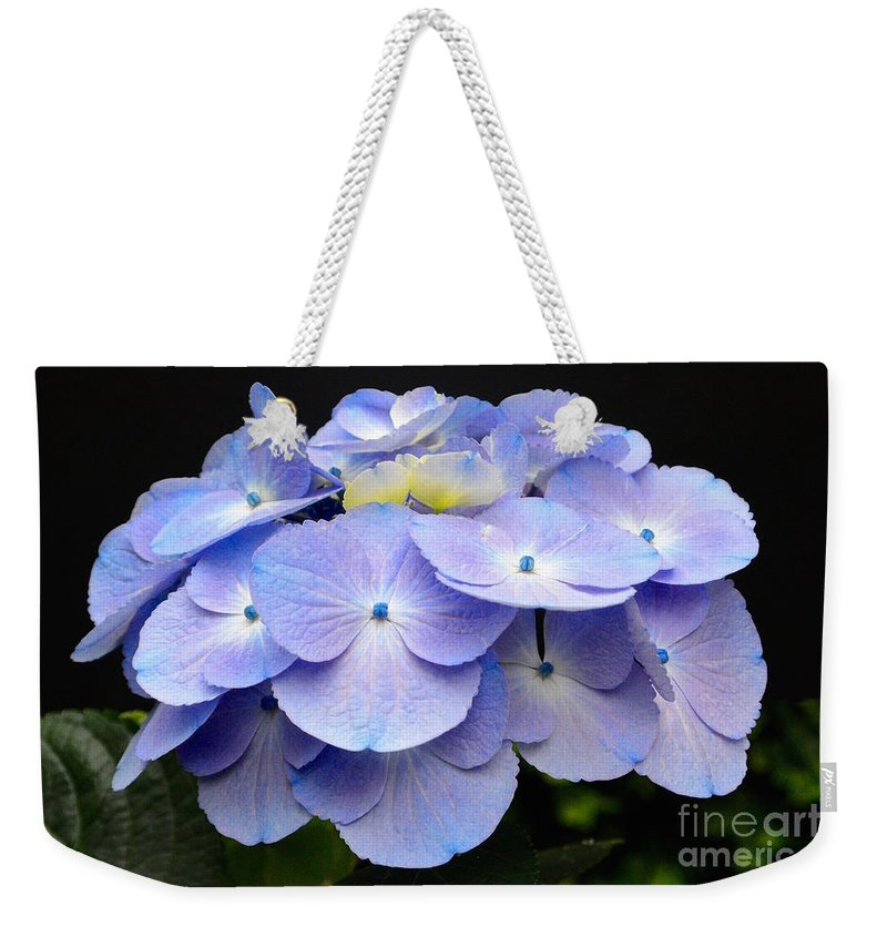 Hydrangeas In Purple Weekender Tote Bag featuring the photograph Hydrangeas In Purple by Jeannie Rhode