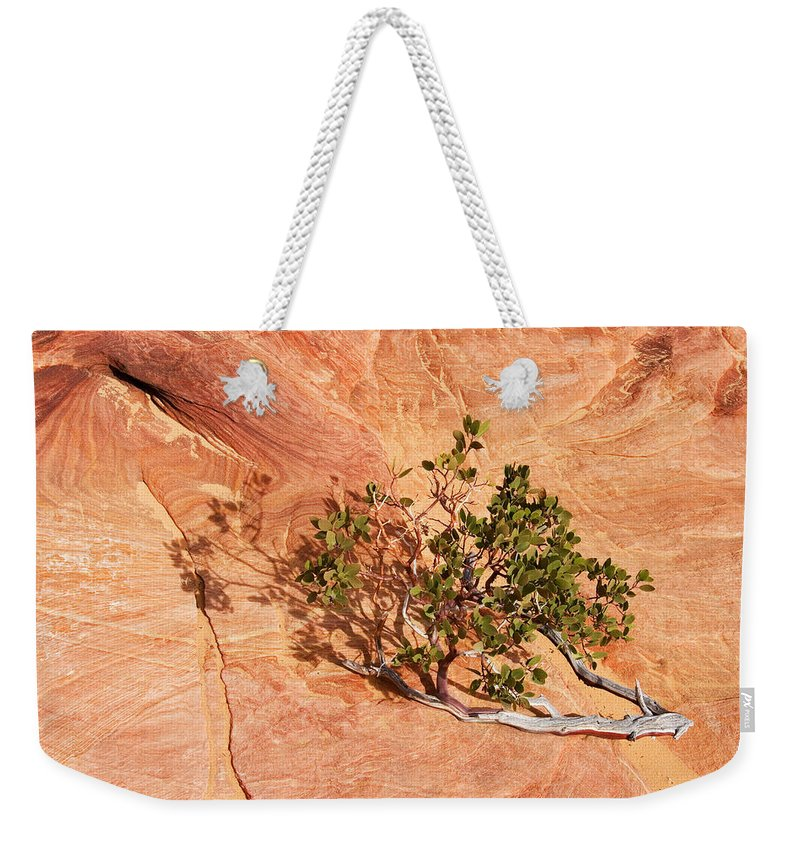 Vine Weekender Tote Bag featuring the photograph I Am The Vine by Mike Dawson