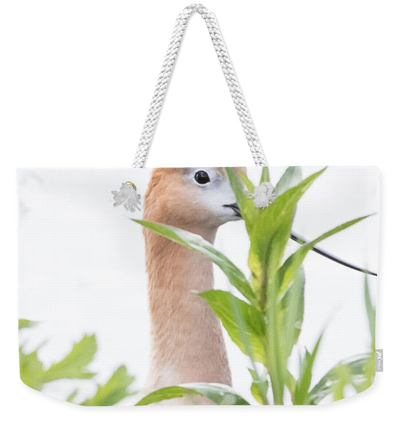 Avocet Weekender Tote Bag featuring the photograph I Am Watching You by Vicki Stansbury