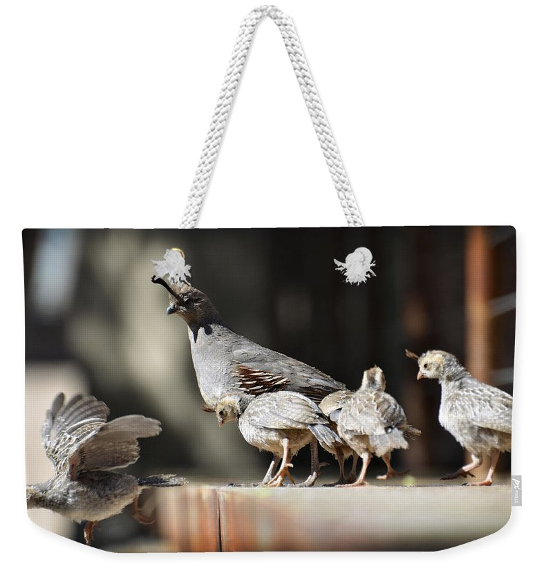 Gambel's Quail Weekender Tote Bag featuring the photograph I Can Fly by Saija Lehtonen