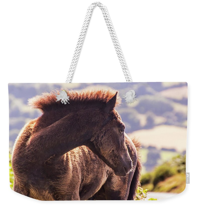 Pony Weekender Tote Bag featuring the photograph I Can See You by Tom Conway