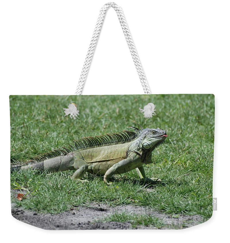 Macro Weekender Tote Bag featuring the photograph I Iguana by Rob Hans
