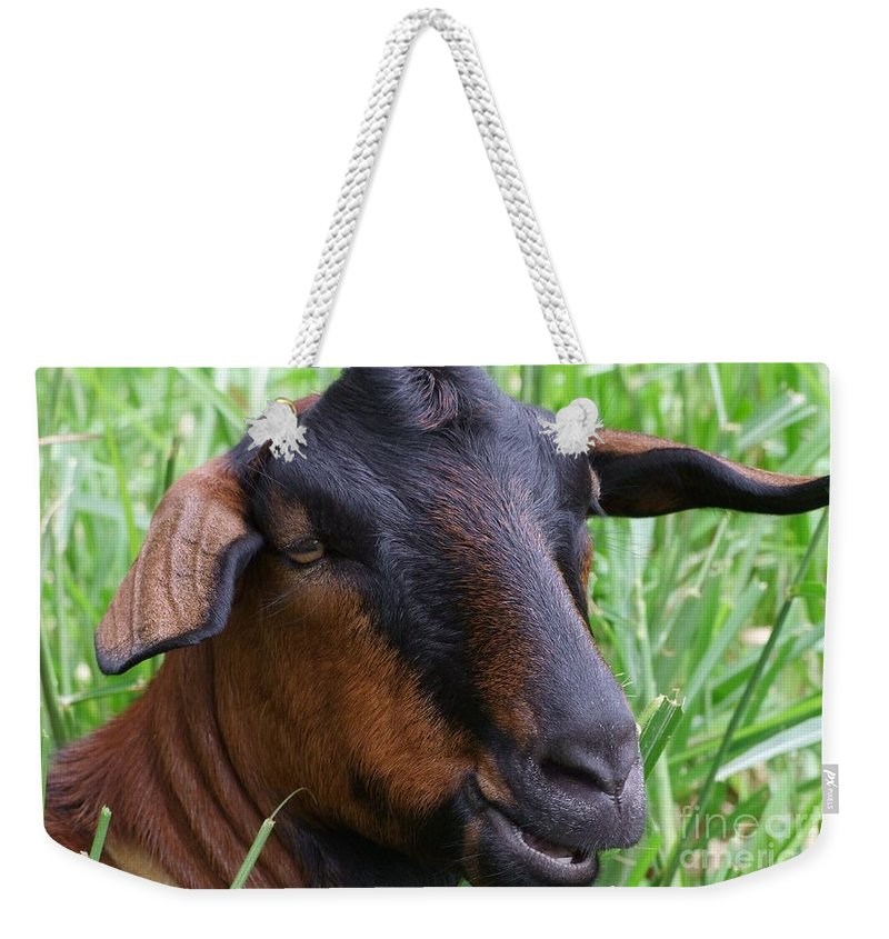 Goat Weekender Tote Bag featuring the photograph I Just Got Coiffed by Mary Deal