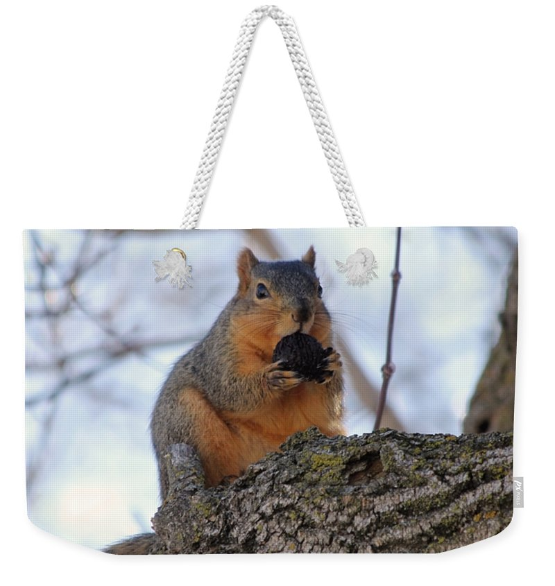 Squirrel Weekender Tote Bag featuring the photograph I Know I Can Make It Fit by Lori Tordsen
