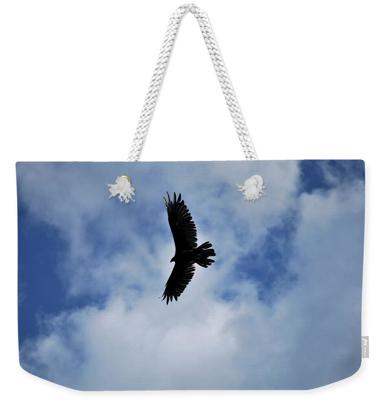 Bird Weekender Tote Bag featuring the photograph I Love The View From Up Here by Lori Tambakis