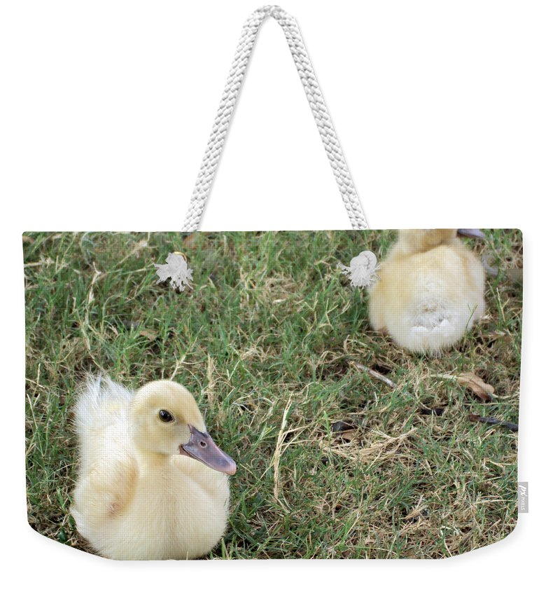 Duck Weekender Tote Bag featuring the photograph I Need Some Space by Angelina Vick