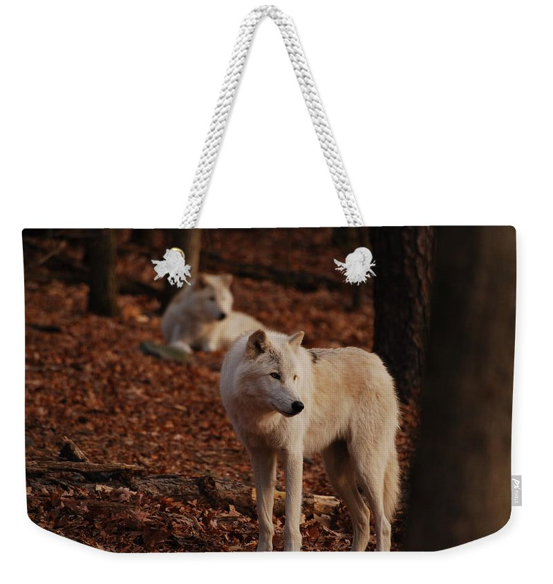 Wolf Weekender Tote Bag featuring the photograph I See It Too by Lori Tambakis