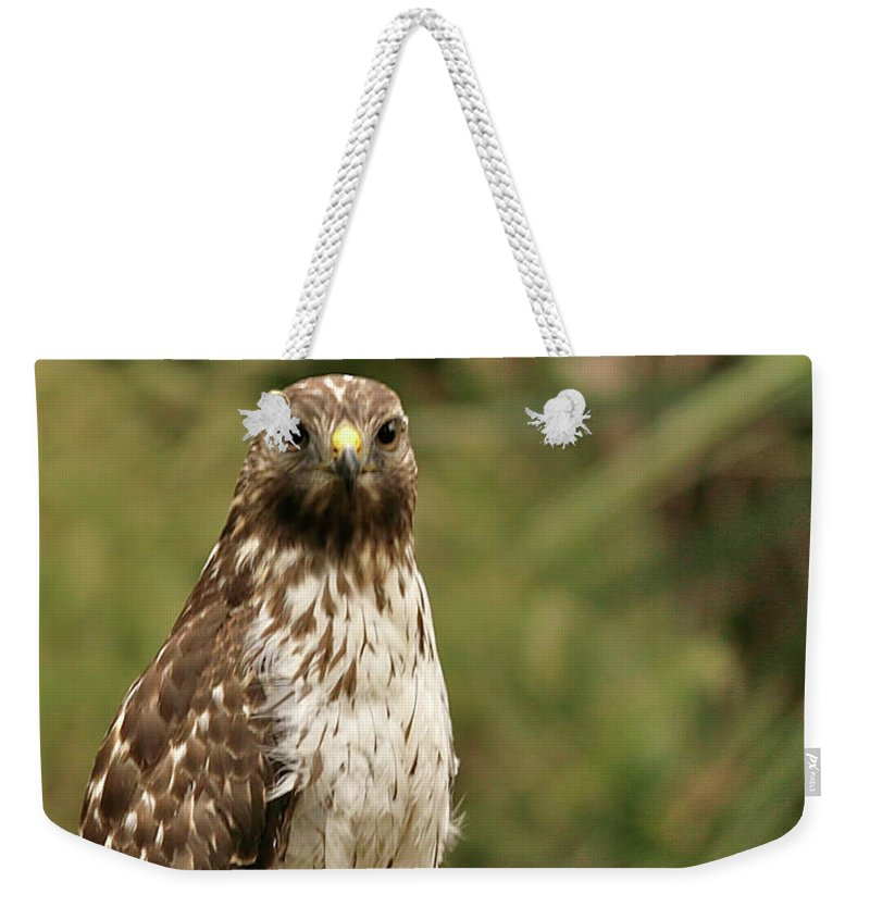 Bird Weekender Tote Bag featuring the photograph I See You by Phill Doherty