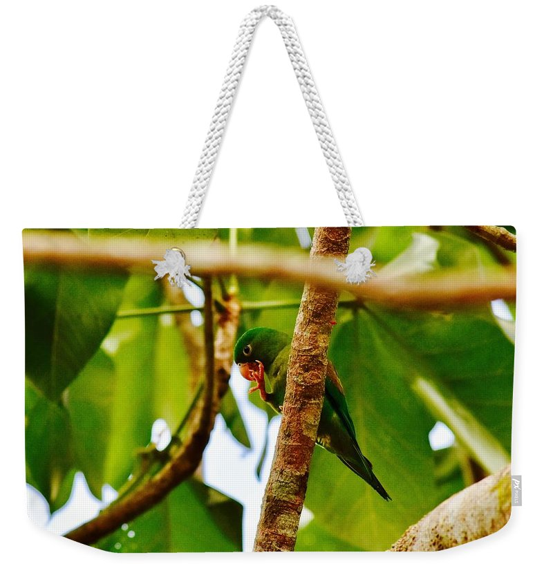 Green Parrot Weekender Tote Bag featuring the photograph I Spy by Danny Aab