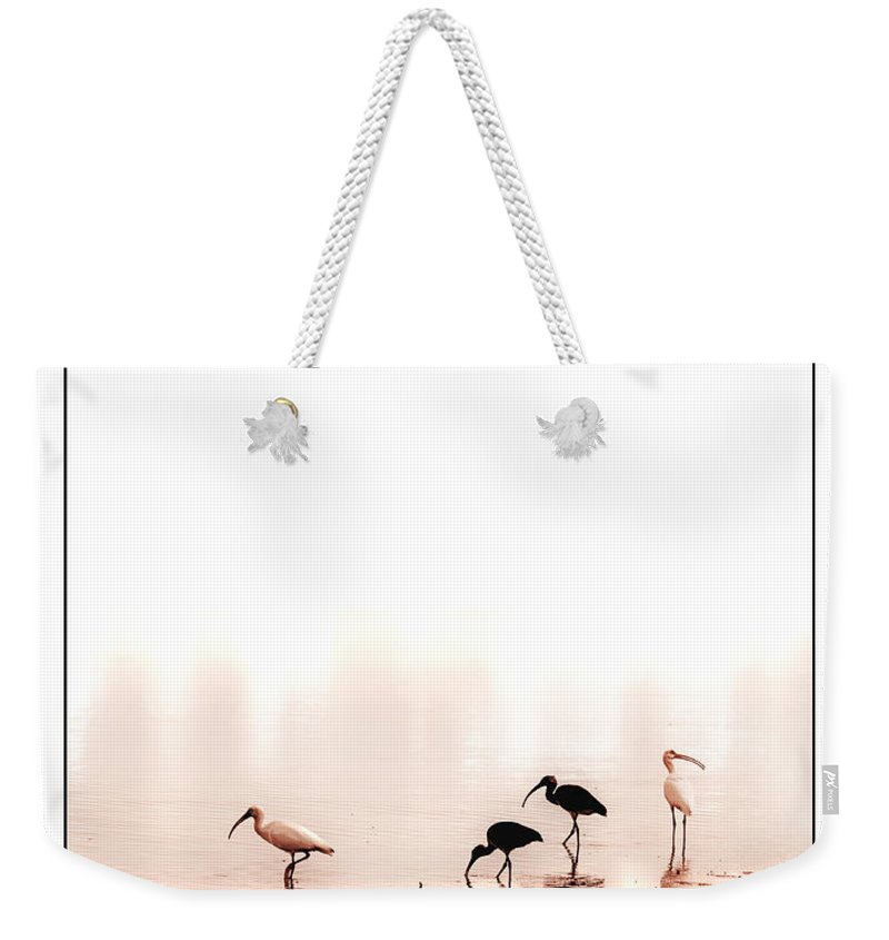 Ibis Weekender Tote Bag featuring the photograph Ibis by Mal Bray